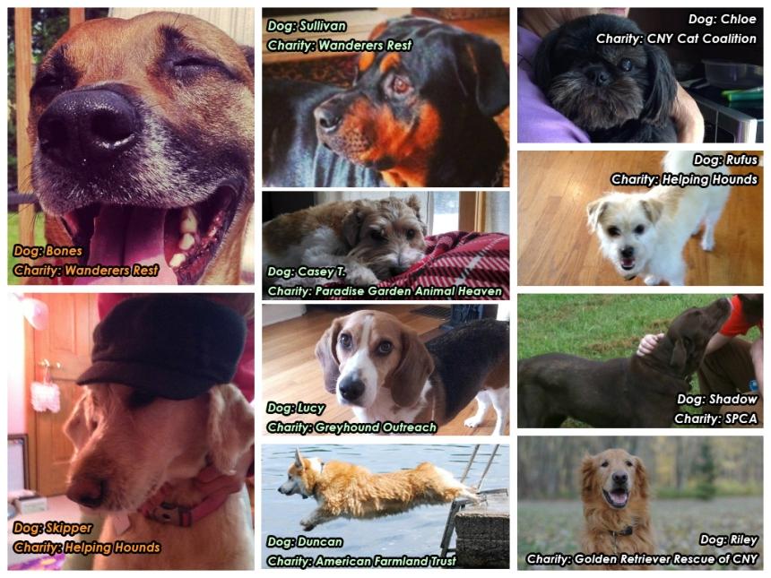 dogs_cnycf_titles_4